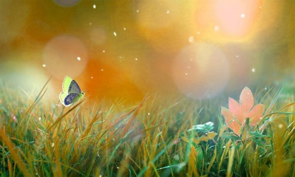 Beautiful Butterfly stood on a Grass Stem Wallpaper Mural