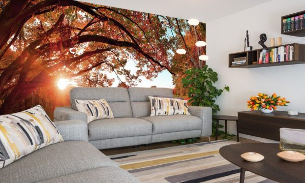 Sunrise Autumn Park Wallpaper Mural