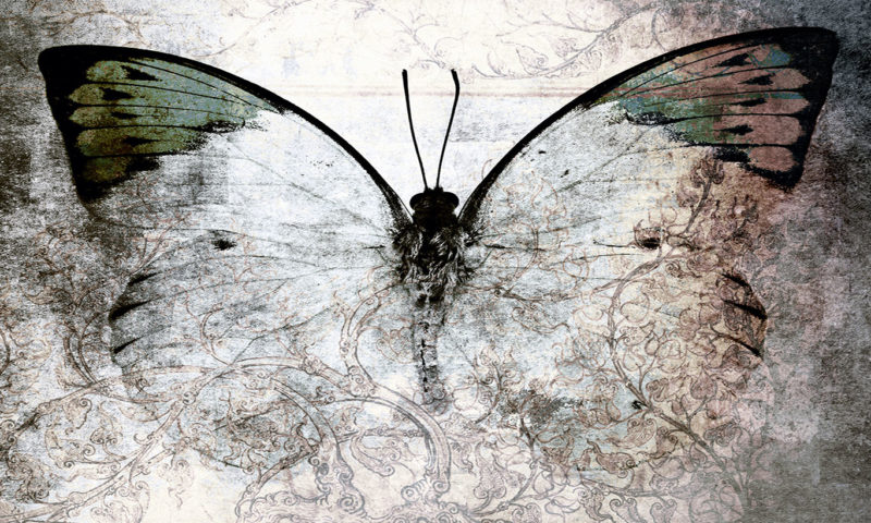 Delicate Butterfly In Shades Of Grey Mural Wallpaper Art