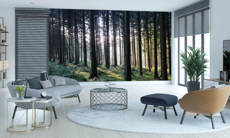 Grassy Green Moody Autumn Forest Mural