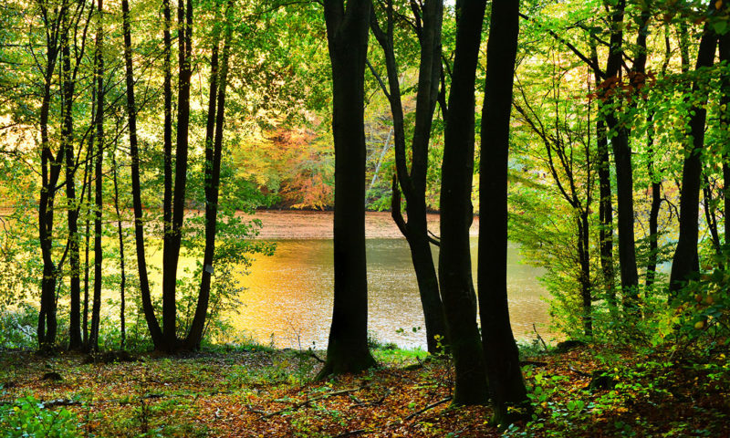 Moody Green Forest and Lake Wallpaper Mural