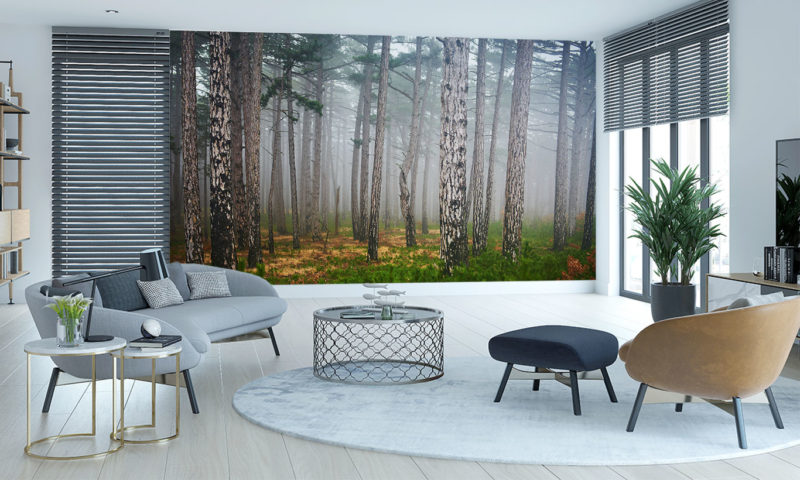 Pinetrees misty forest wall mural