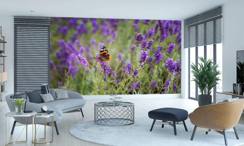 Pretty Butterfly And Lavender Wall Art