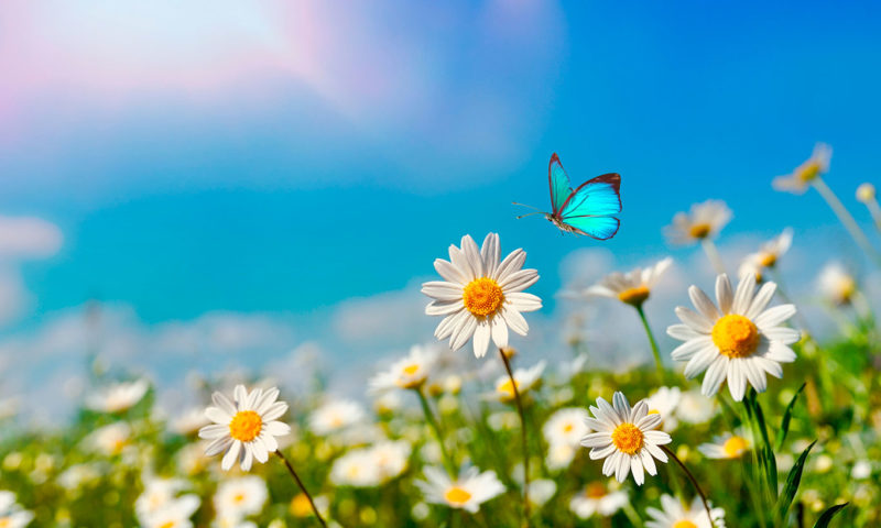 Wild Flowers and Butterfly wall Mural