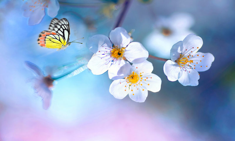 Delicate Butterfly and Flowers Wallpaper Mural