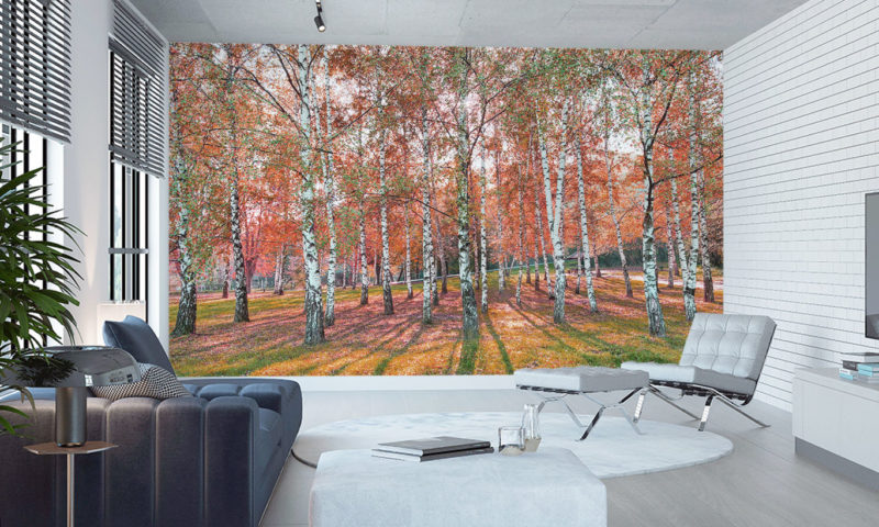 Stunning Spaced Birch Trees Wall Mural