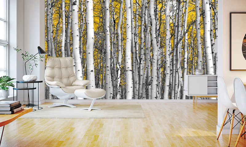 Compact Birch Tree Forest Wall Mural