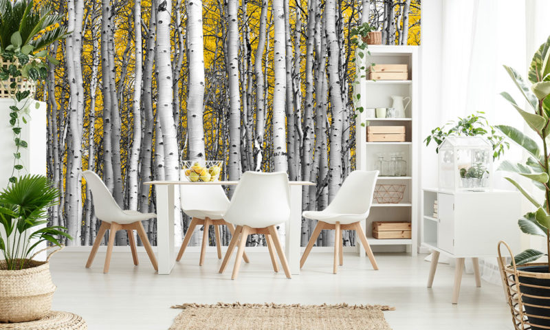 Compact Birch Tree Forest Wallpaper