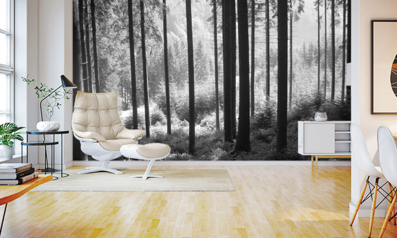 Greyscale Tall-tree Forest Wall Mural