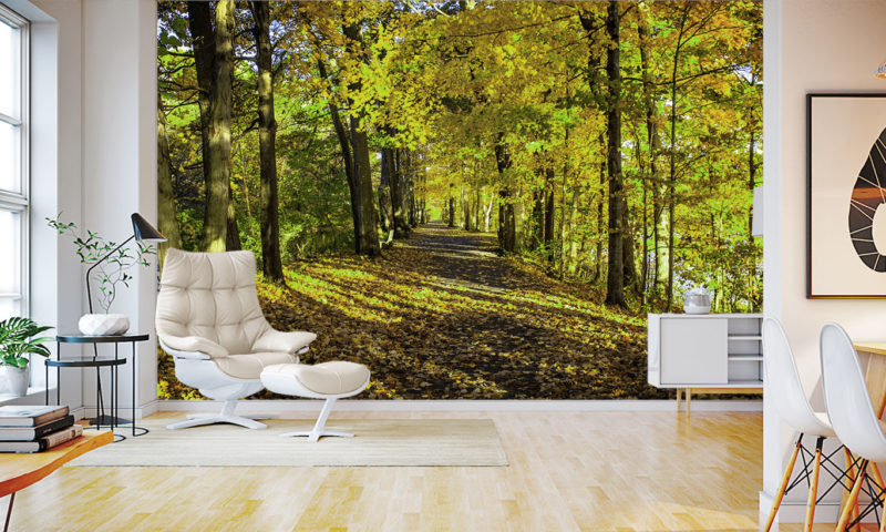 Amazing Serene Forest Walkway by River Wall Art