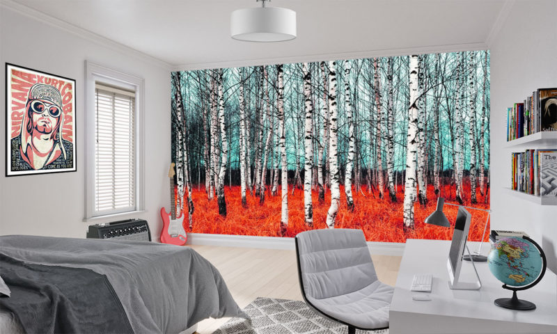 Bare Birch Tree Forest with Orange Grass Wall Mural