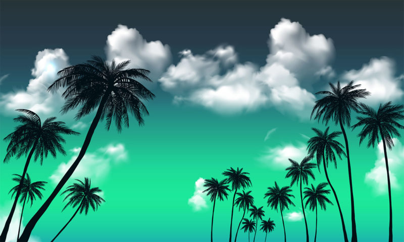 Cloudy Aqua Skyline with Palm Trees Wallpaper Mural