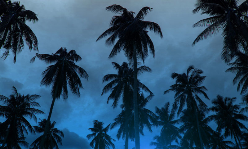 Cloudy Blue-hazed Skyline with Palm Trees Wallpaper Mural