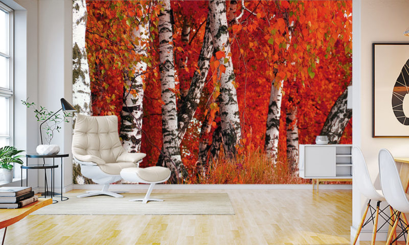 Incredible Red Birch Trees Wall Mural