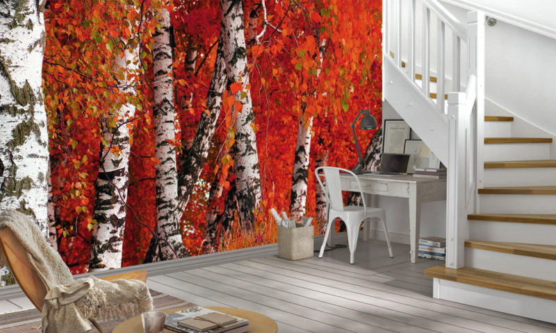 Incredible Red Birch Trees Wallpaper