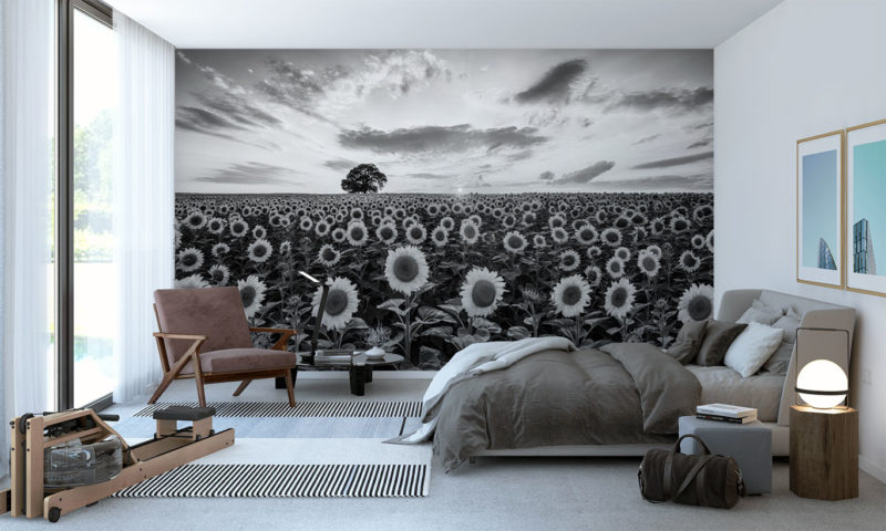 Compacted Sunflower Farm with Oak Tree Wallpaper
