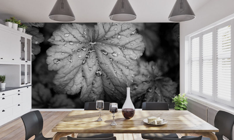 Grayscale Leaf with Rain Droplets Wallpaper