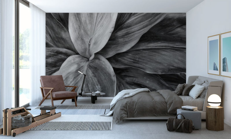 Stunning Grayscale Large Plant Wallpaper