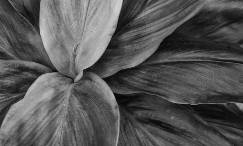 Stunning Grayscale Large Plant Wallpaper Mural