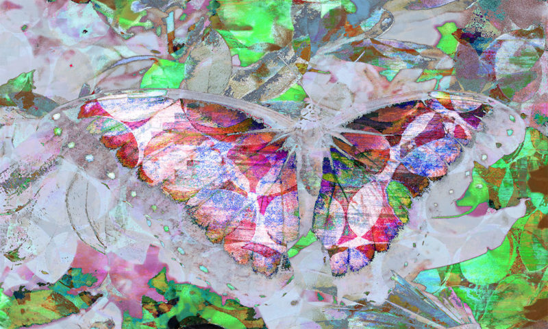 Abstract Colourful Butterfly Wings Spread Wallpaper Mural