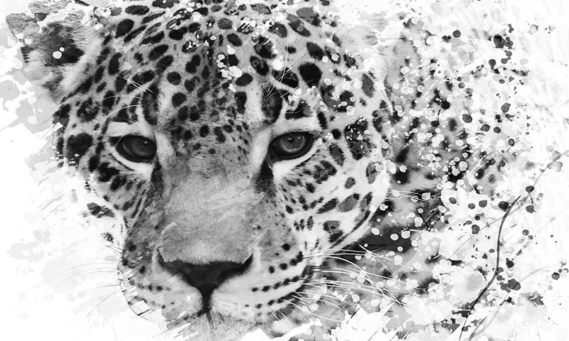 Black and White Leopard Sketch Wallpaper Mural